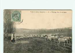Dép 19 - Corrèze Animaux - Moutons - Types Et Scènes Champêtres -Passage Dans Les Montagnes -2 Scans-Attention Voir état - France