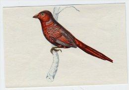Bunte Vögel Aus Aller Welt (1953) - II.130 - Neochmia, Sonnenastrild, Zonastrild, Crimson Finch, Diamant Phaeton - Unclassified