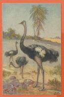 X050, Autruche, Ostrich, Strauss, 126, Non Circulée - Vogels