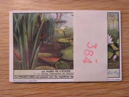 LA FLORE DE L´ ETANG 384  Liebig Série Complète De 6 Chromos Trading Cards Chromo - Liebig