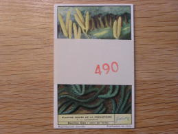 PLANTES ISSUES DE LA PREHISTOIRE 490  Liebig Série Complète De 6 Chromos Trading Cards Chromo - Liebig