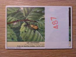 LES ARAIGNEES 487 Spider Liebig Série Complète De 6 Chromos Trading Cards Chromo - Liebig