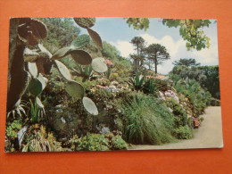 28538 PC: Tresco Gardens, SCILLY. - Unclassified