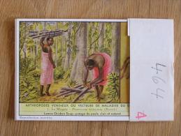 ARTHROPODES VENIMEUX OU VECTEURS DES MALADIES AU CONGO 464 Liebig Série Complète De 6 Chromos Trading Cards Chromo - Liebig