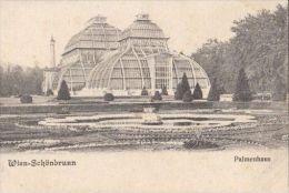 CPA VIENNA- SCHONBRUNN PALACE, PALM TREES HOUSE - Château De Schönbrunn
