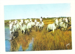 Cp, Animaux, Chevaux Dans Les Marais Camarguais - Paarden