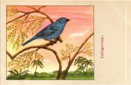 60 Cards SLUIS Advertising Bird Sead, Vogelzaad Grains Pour Oiseaux - Coloured Postcards - Chromos
