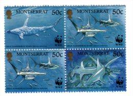 TIMBRE - MONTSERRAT - LOT 4 TIMBRES REQUINS / SQUALES - NEUFS - Yv. N°1016/19 - Montserrat