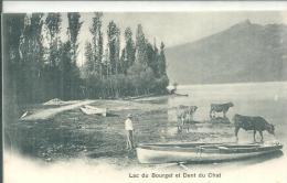 Lac Du Bourget Barque Vaches - France