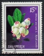Albania 1974 - Pianta Medicinale Uva Ursina, Medicinal Plant Bearberry - Albanie