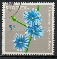 Albania 1975 - Cicoria Comune, Chicory Fiori Flowers - Albanie