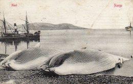 CPA  -  HVAL  -  NORGE  -   BALEINES  En  NORVEGE  - 1907   (scan Recto - Verso ) - Norvège