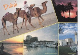 ZS42501 View Of Dubai  United Arab Emirates Chamel Camel    2  Scans - Emirats Arabes Unis