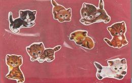 Manualidades, Cartulina GATOS, CATS (2) - Cromos