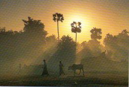 Birmanie - Lever De Soleil Sur La Campagne - Myanmar (Burma)