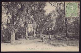 BRAGA - Postal  Bom Jesus. Rua Dos Sobreiros. Old Postcard PORTUGAL 1900s - Braga