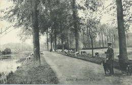 Ieper / Ypres - Boulevard Extérieur - Berger / Herder -1909 ( Verso Zien ) - Ieper