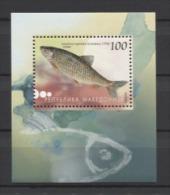 Macedonia Fishes Poissons Peces Fische 2007 Mi Bl#16 MNH - Pesci