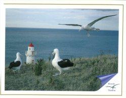 (238) New Zealand Lighthouse - Phare - Taiaora Head With Royal Albatross - Faros