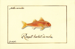 Thematiques Poissons Illustrateur Domitille Heron Mullus Surmuletus Rouget Barbet De Roche - Visvangst