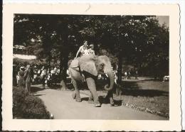 Photo - Personnes à Dos D'un éléphant - - Ohne Zuordnung