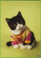 Voyo POLAND PULLOVER CAT - Rachael Hale 2005 MINT R-031 - Chats
