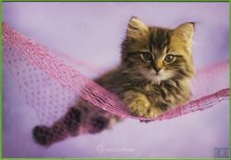 Voyo POLAND CAT With NET - Rachael Hale 2006 MINT R-048 - Chats