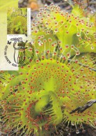 Australia 2013 Carnivorous Plants 60c D. Rupicola Maximum Card - Cartoline Maximum