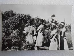 CP Afrique Australe  - BASUTOLAND  -  Depuis 1966  Royaume Du LESOTHO  - Prière A La Vierge - Lesotho