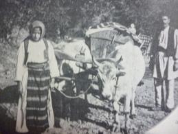 Serbie , Paysans Serbes , édition Bong , Circa 1914 - Documents Historiques