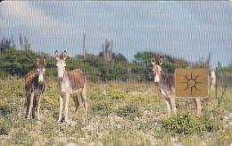 Bonaire, BON 13, Donkeys, 2 Scans. - Antilles (Netherlands)