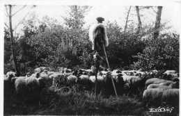 Cpm Photo De E.VIGNES, Pays Landais, Retrospective, Un échassier  (21.17) - Aquitaine