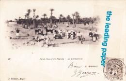 BENI-OUNIF DE FIGUIG - La Palmeraie - Algeria