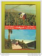 AZORES POSTCARD S. MIGUEL PINNEAPPLE HOT HOUSES AGRICULTURE 1960s AÇORES AZOREN - Culturas