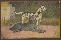 DOG HUNDE GREAT DANE DOGGE OLD POSTCARD #58 SIGNED - Chiens