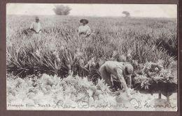 Australia QLD NUNDAH Pineapple Farm  Au469 - Autres