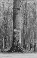 Le Gros Chène - Lyons-la-Forêt