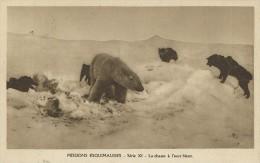 310F   Chiens De Chasse à L'ours Blanc - Bears