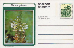 South Africa Mint Postcards Set Of 10 - Cactusses