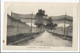 Rare CPA Militaria : Argonne - Route Camouflée - Guerre 1914-18