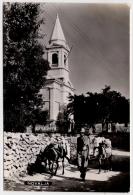Postcard - Novalja, Donkeys      (V 20042) - Croazia