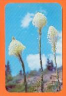 "U.S.A.  IDAHO  -  73685  "" BEAR GRASS ""  On The Alpines Slapes Of North Idaho And Eastern Washington - Etats-Unis"