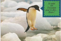 Carte Pingouin Avec Humour. (Voir Commentaires) - Altri