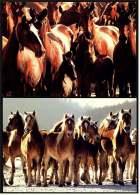 2 X Pferde Ansichtskarten  -  Pferde Herden  (103) - Pferde
