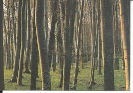 CAL470 - CALENDARIETTO 1997 - LITOGRAFIA ITALGRAF - Calendari
