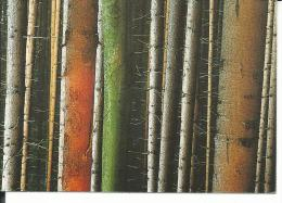 CAL471 - CALENDARIETTO 1997 - LITOGRAFIA ITALGRAF - Calendari