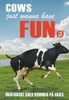 Cows Want To Have Fun. Denmark  A-2884 - Vaches