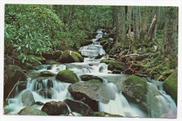 This A View Of Leconte Creek Below Rainbow Falls On The Side Of Mt. LeConte - USA - Smokey Mountains