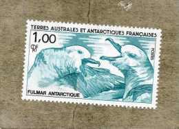 TAAF : Fulmar Boréal (Fulmarus Glacialis), Ou Pétrel Fulmar Ou Fulmar Glacial  - Oiseaux -  Faune Antarctique - - Terres Australes Et Antarctiques Françaises (TAAF)