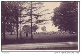 D22 62 - BELGIQUE - MARNEFFE - (animé) La Prairie De 2de Division (foot)  - Nels - Burdinne